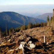 Ріжуть все живе. У нацпарку на Прикарпатті під виглядом санвирубки продовжують пиляти ліси (відео)