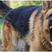 На Прикарпатті собака здійснила напад на маленьку дівчинку