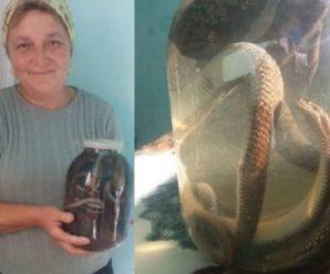 Цілюща отpута: Жінка з Верховинщини лікує людей зміїною настоянкою