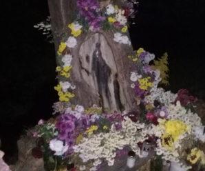 Справжнє диво: на Калущині на дереві проявився образ Божої Матері (фото)