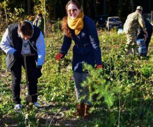 Франківці власноруч посадили у лісі тисячу модрин