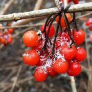 Від 22 градусів тепла до заморозків і снігу: Синоптики розповіли, яких сюрпризів від погоди варто очікувати українцям