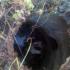 На Івано-Франківщині корова впала у відкритий колодязь і загинула (ФОТО)