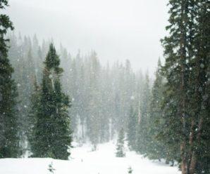"""""""Зима вже близько!"""": в Карпатах випало півметра снігу (фото)"""
