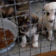 Мер Косова каже, що будівництво притулку для тварин тільки погіршить ситуацію