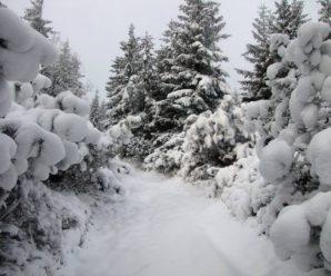 У Карпатах справжня зима (ФОТО)