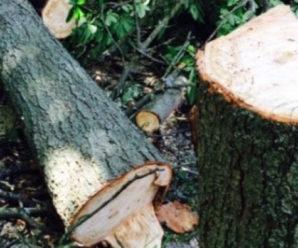 На Коломийщині дерево вбило молодого чоловіка