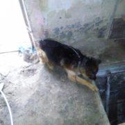 У Бурштині 23-річний хлопець провалився в підвал