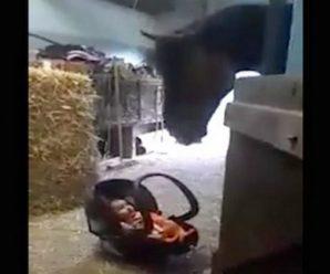 Мама на секунду залишила свого п'ятимісячного малюка в стайні. Те, що зробив кінь коли дитина розплакалася – потрібно бачити!