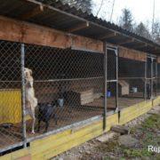 Франківчанка переїхала в село, щоб дати притулок півсотні котів і собак