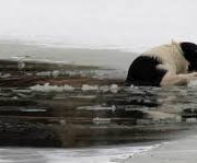 В Івано-Франківську на міському озері дві собаки провалилися під кригу