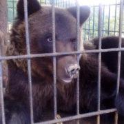 Після нападу ведмедя львів'янка хоче стягнути витрати на лікування з власників бази відпочинку