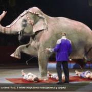 У США вперше заборонили експлуатувати тварин у цирку