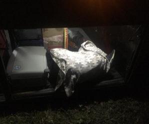 Прикарпатець, котрого п'яним висадили з автобуса, перебуває в комі