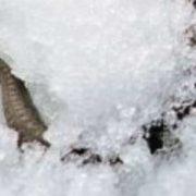 У Львівській області чоловіка посеред зими вкуcила змія