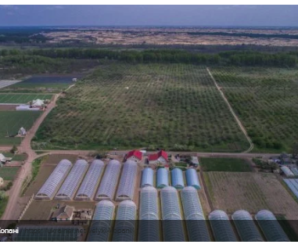 """""""Нежданий"""" бізнес: історія фермера, який вкладає в овочі все до копійки"""