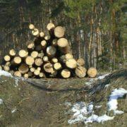 На Прикарпатті виявили незаконну рубку дерев