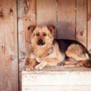 Увага! Флешмоб на підтримку безпритульних собак