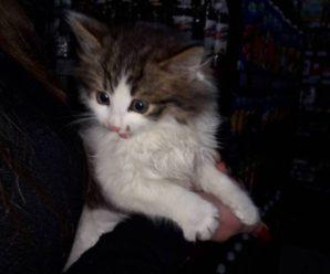 У Івано-Франківську дівчинка врятувала кошеня, яке ледь не забили молотком