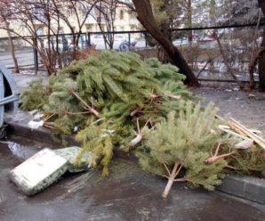 У Франківську заборонено викидати ялинки на смітники