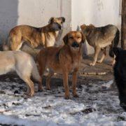 Тіло 52-річного калушанина погризли безпритульні пси