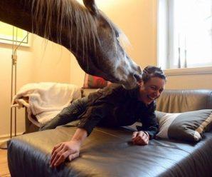 На старий новий рік у трьох селах Івано-Франківщини до хати заводять… коня