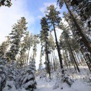 Рятувальники вночі шукали 19-річного юнака, що після коляди заблукав у лісі між Ворохтою і Яблуницею
