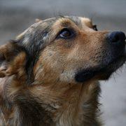 В Івано-Франківську нарахували більше тисячі безпритульних собак
