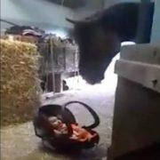 Мама на хвилинку залишила немовлятко поруч з конем. Ви тільки подивіться, що відбувається як тільки дитинка починає плакати (відео)