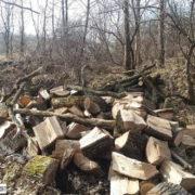 У Калуші штрафують за одне зрубане дерево, але поліція майже не реагує на системну рубку столітніх дубів