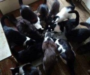 Франківська пенсіонерка та її 13 котиків потребують допомоги
