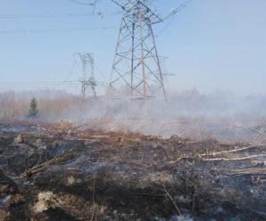 У Франківську через масштабну пожежу вигоріло 50 гектарів лісу (відео)