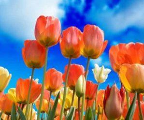 До +28: весна в Україні буде значно теплішою, ніж зазвичай