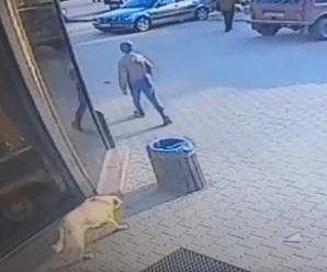 На Прикарпатті бродячі собаки напали на дитину (ФОТО, ВІДЕО)