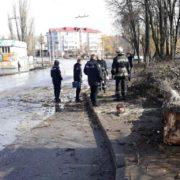 У Віннниці дерево впало на дитину, вона померла (фото)