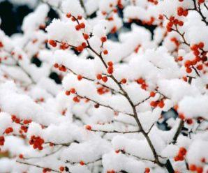 Завтра майже всю Україну накриють дощі з мокрим снігом (відео)
