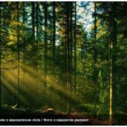 В Україні з метою відновлення висадили 24 тисячі гектарів лісу