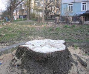 Обережно, хімія! У Франківську пні дерев обробили невідомою речовиною, – журналіст (фото)
