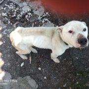 На Прикарпатті господарі морили собаку голодом