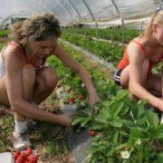 Українцям у Польщі більше не світять заробітки: під прицілом мільйони земляків