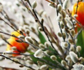 Привітання з Вербною неділею для рідних і друзів у віршах