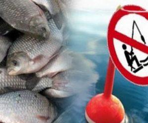 16 прикарпатців постануть перед судом за незаконне рибальство