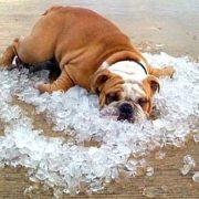 Від 30 градусів спеки до різкого холоду: прогноз погоди на тиждень в Україні