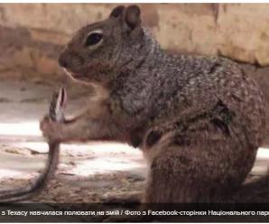 Безжалісна білка з Техасу навчилася полювати на змій – фото