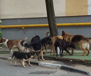 У Франківську на Пасічній на жінку напала зграя собак. ФОТО