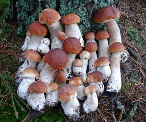 Скільки прикарпатці заробляють на продажу білих грибів та лісових суниць?