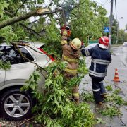 Перша жертва негоди: повалене вітром дерево вбило людину