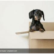 11 порад, як зробити переїзд простішим