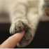 У Калуші рятувальники тільки з третьої спроби витягнули кота з вентиляції