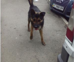 У Калуші горе-господарі залишили собаку, прикувавши її на ланцюг